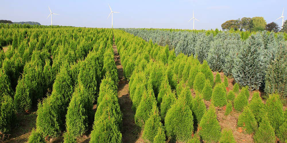 pflanzen-gockel-heckenpflanzen-sauerland-xs-004
