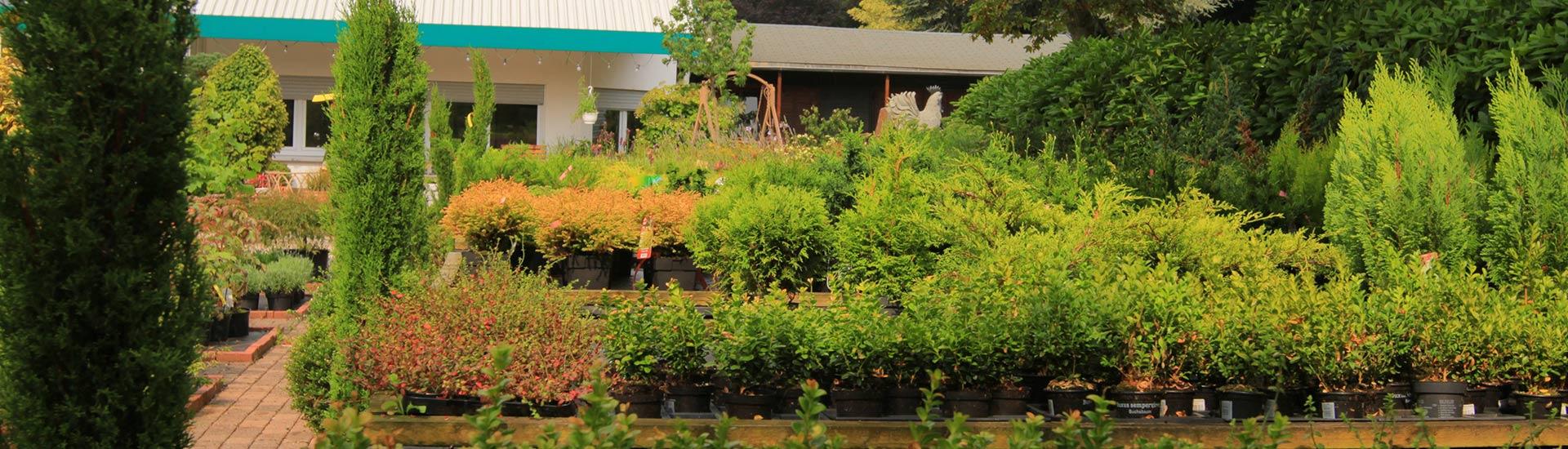 pflanzen-gockel-pflanzencenter-sauerland-005