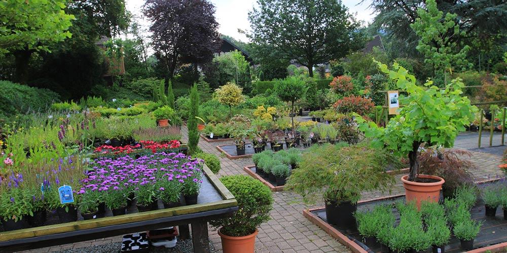 pflanzen-gockel-pflanzencenter-sauerland-xs-004
